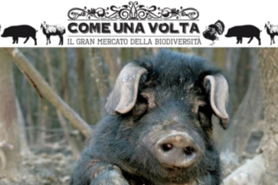 """Torna il mercato della biodiveristà """"Come una volta"""" a Parma"""
